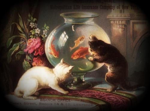 cats-goldfish bowl-art-antique