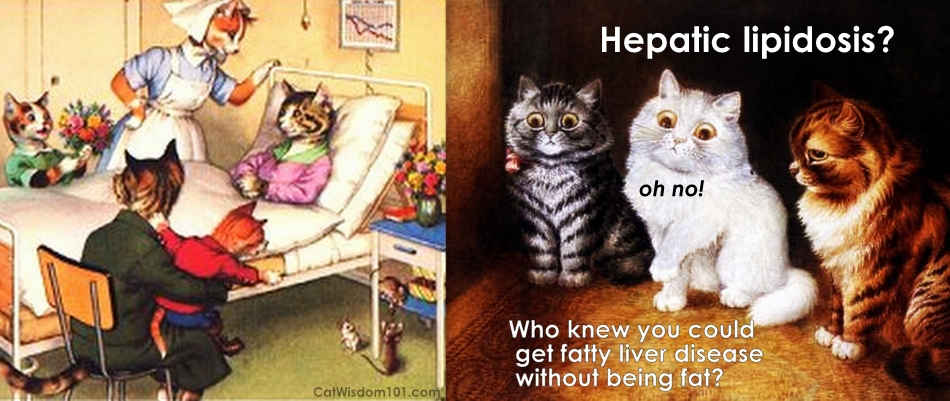 hepatic-lipidosis-fatty-liver-disease-cats