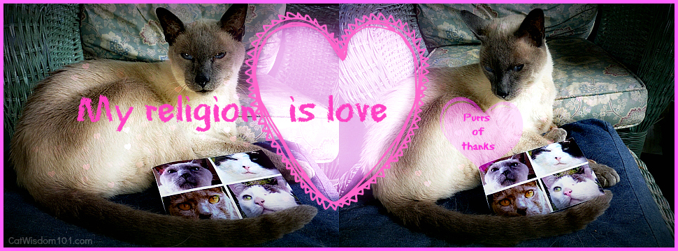 mondays with merlin-siamese cat- amma-blessing