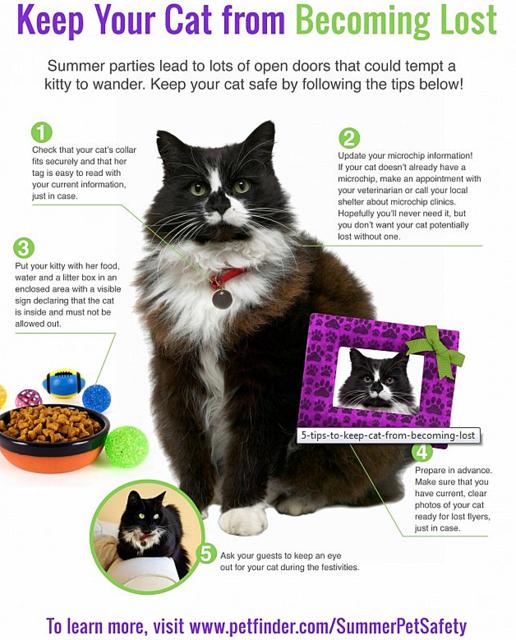 petfinder.com-summer pet safety-cats-lost