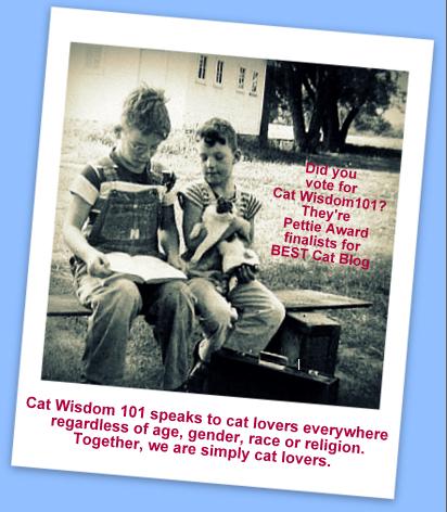 pettie awards-cat wisdom 101