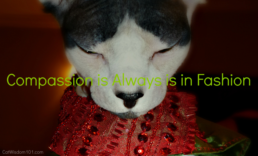 compassion is always in fashion-quote cat fashion