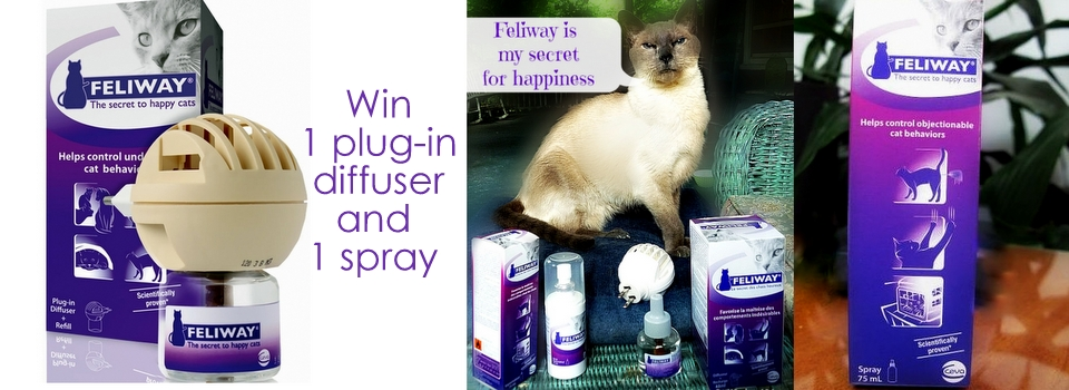 Feliway review giveaway-entirely pets
