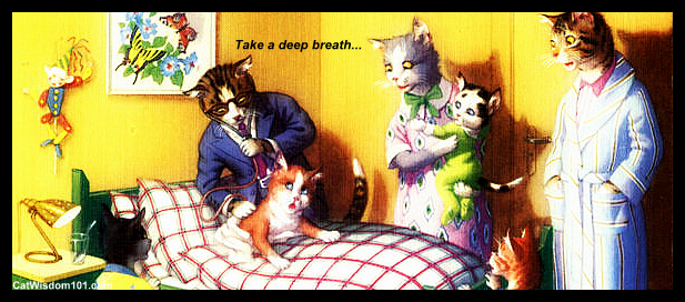 Get well soon-vintage cat doctor-001