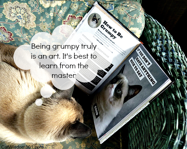 Grumpy Cat book review-giveaway-meme