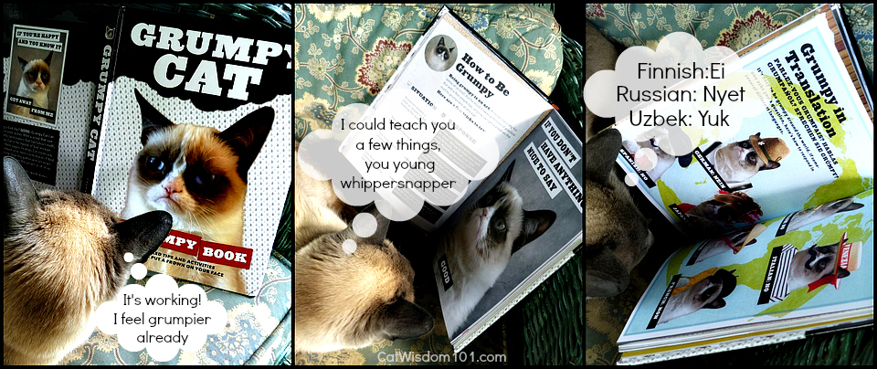 Grumpy Cat book review-giveaway