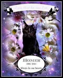 Homer the blind cat RIP