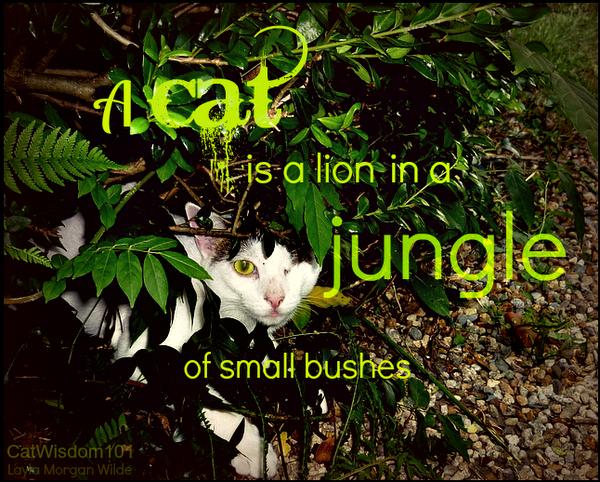 Odin-funny cat quote-jungle
