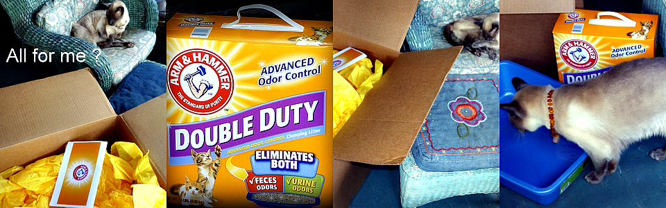 arm and hammer- double duty cat litter