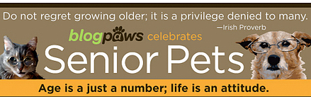 blogpaws celebrates senior pets