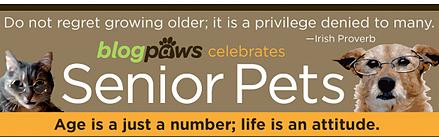 blogpaws celebrates senior pets