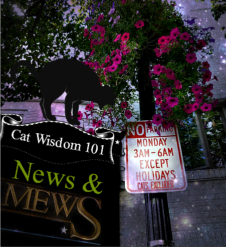 cat wisdom 101-news & mews