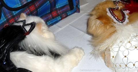 catwalk- cat fashion