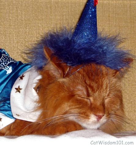 catwalk-cat fashion