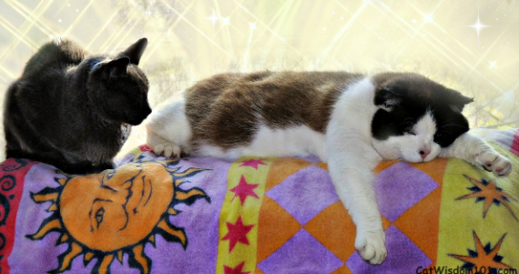 some like it hot-cats sunbathing