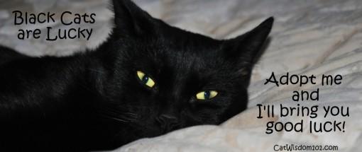 Black cat luck
