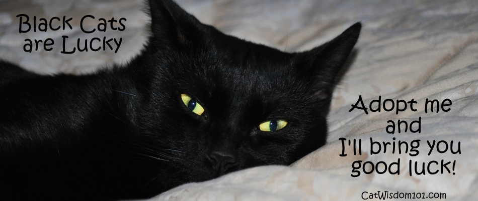The Art of Lucky Black Cats | Creating Purrs since 2011