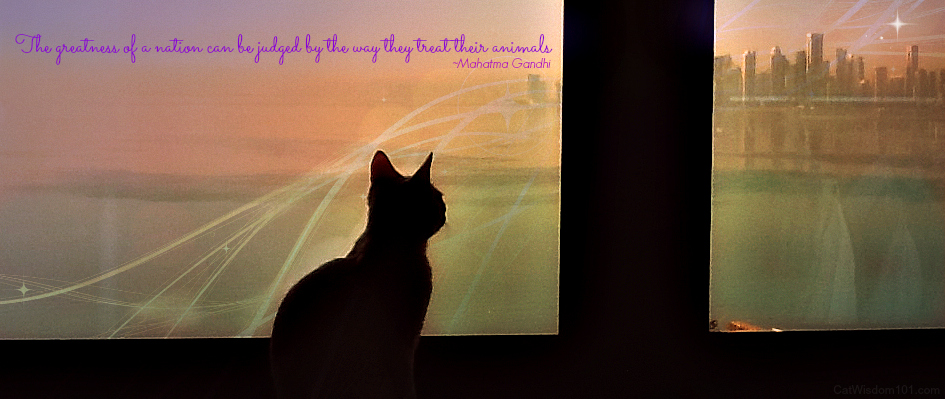Lulu cat Qatar-Friskies cat video contest