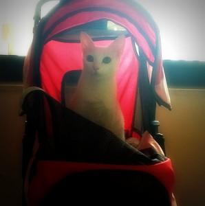 Lulu cat stroller