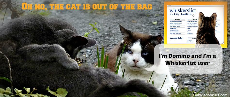 whiskerlist cat book