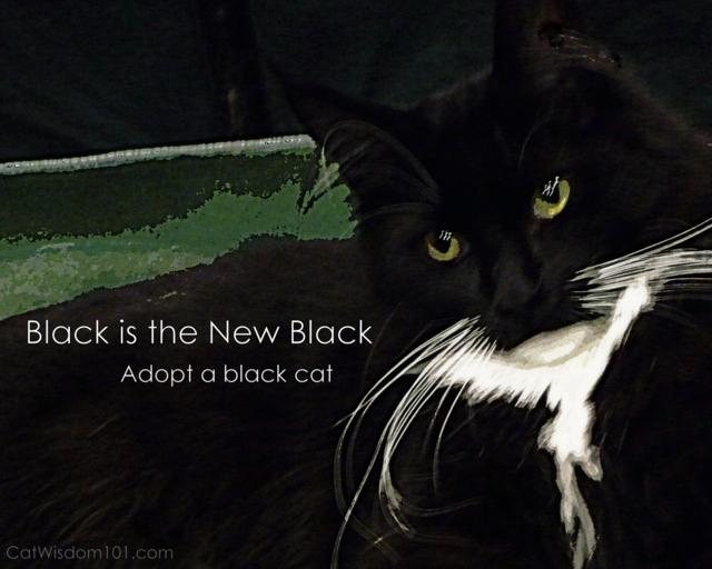 black cat-