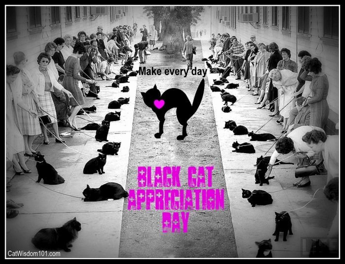 black cat appreciation day-black cats-humor