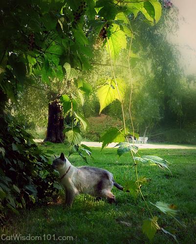 merlin cat autumn garden