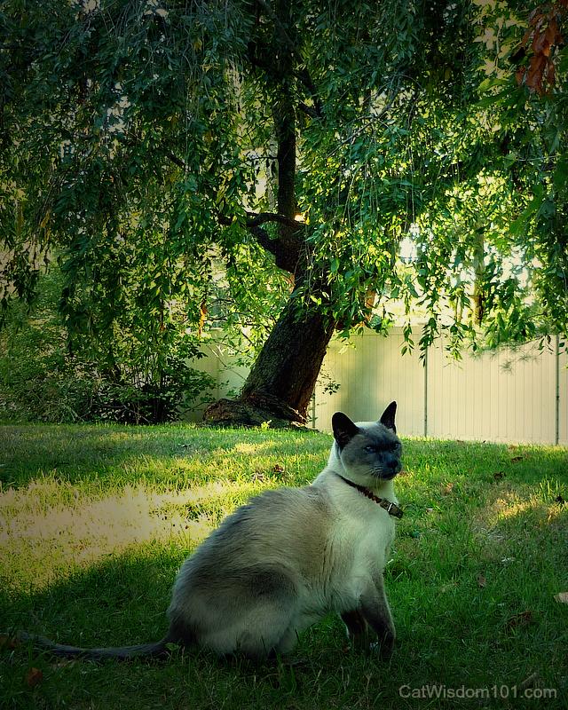 merlin cat garden
