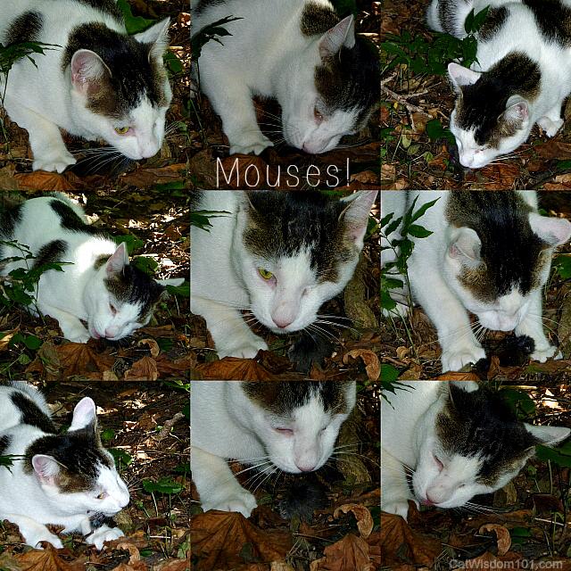 odin cat mouse