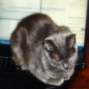 Cat on computer-