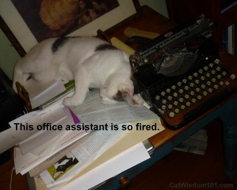 Cat on computer-typewriter