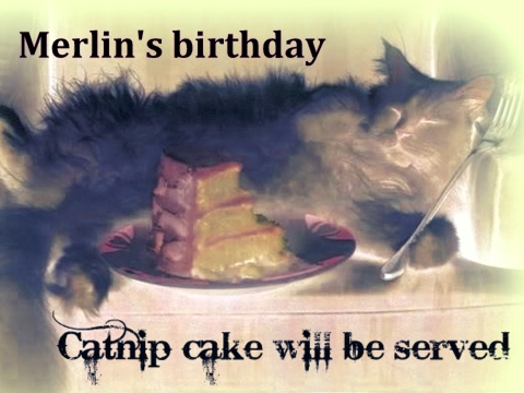 catnip birthday cake