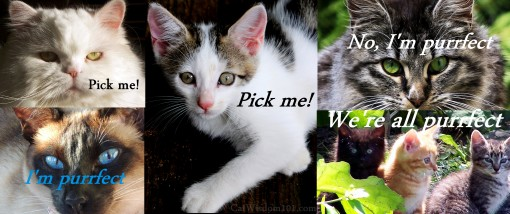 cats collage-purrfect