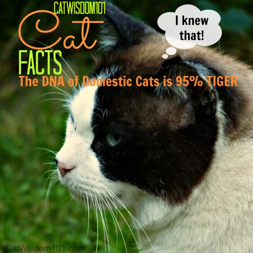 cat DNA is 95% tiger