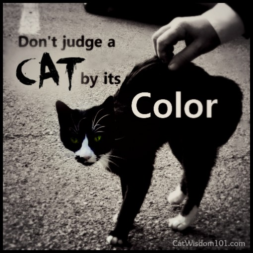don't judge-cat-by its-color-quote-black