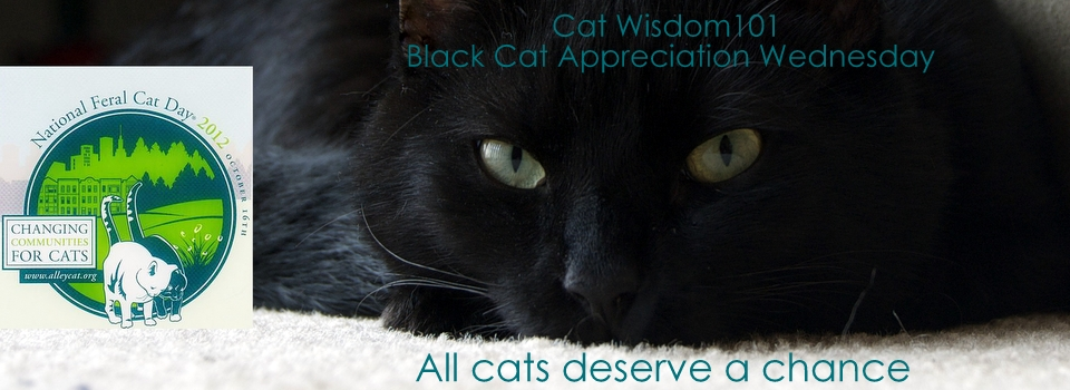 feral cat day-black cat appreciation day