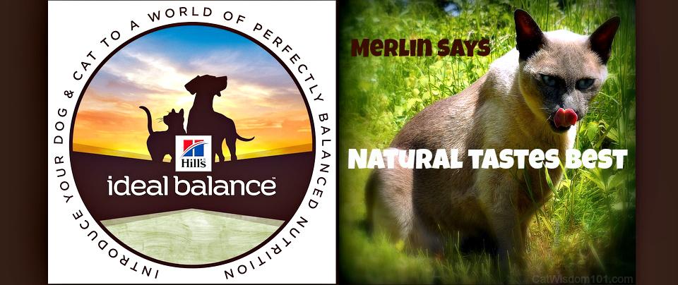 hills ideal balance-cat food-natural