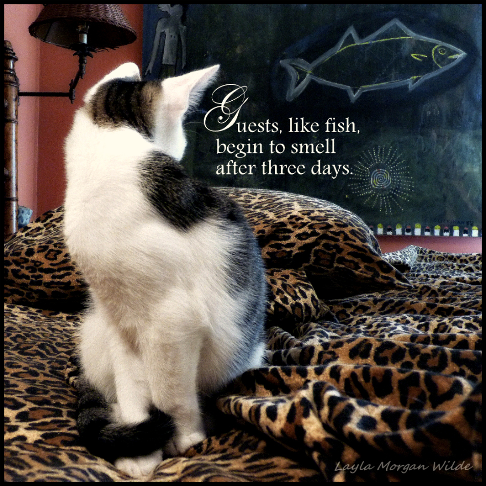 kitty wisdom quote -guests