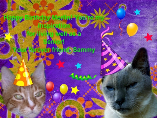 merlin cat birthday