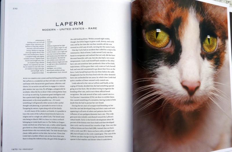 Laperm cat book