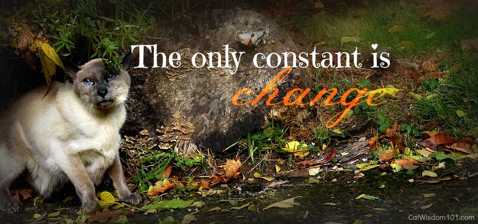 Merlin cat-mancat mondays quote change