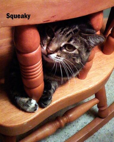 vet 101 Squeaky