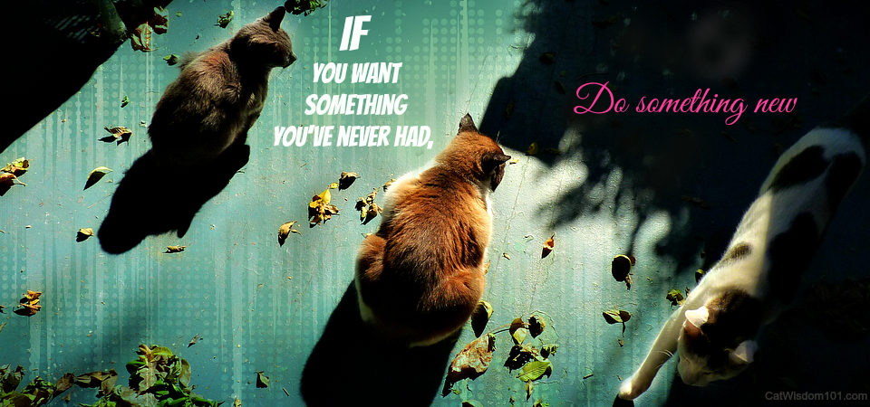 3 cats motivation work quote