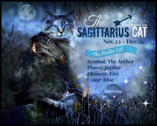 Astro kitty Sagittarius