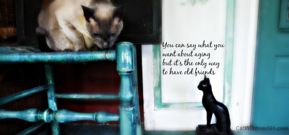 cat photo quote merlin-old friends