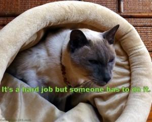 cat quote work