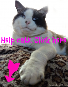help cats click here