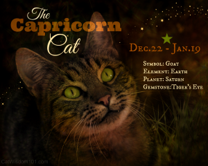Astro-kitty Capricorn