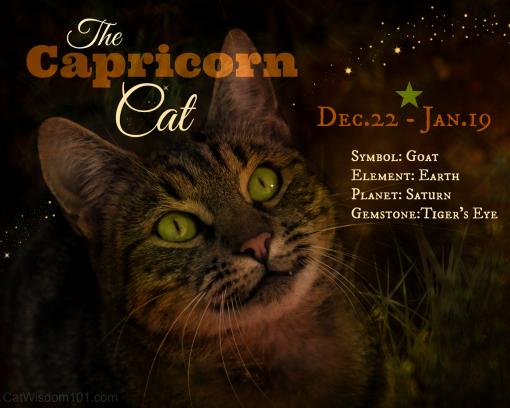 cat astrology capricorn