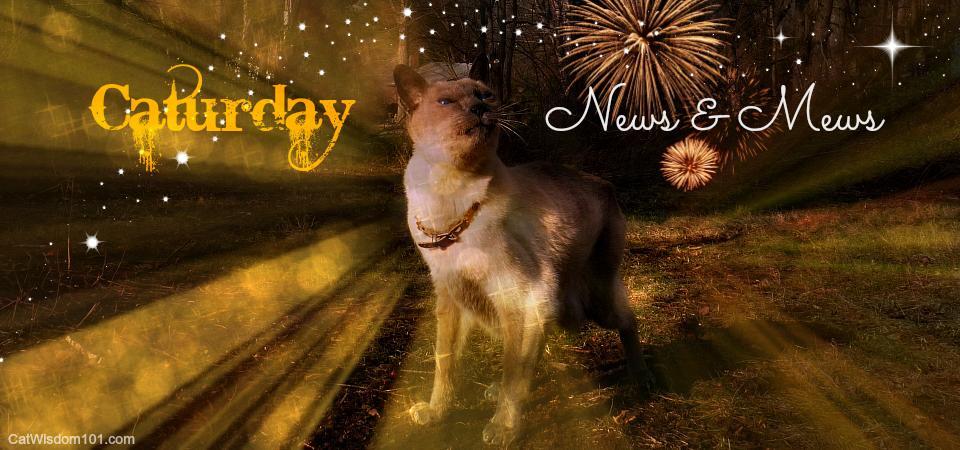 Caturday news